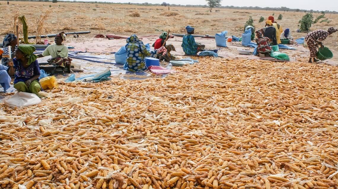 LE PRODAM: UN PROGRAMME REUSSI DE LUTTE CONTRE LA PAUVRETE AU SENEGAL